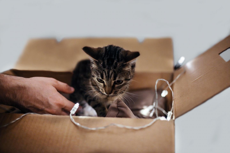 Flyttlåda med en katt i